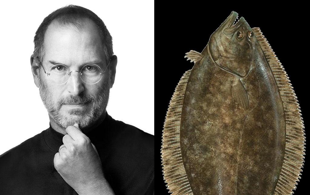 Flounder or Founder?